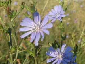 bloemen in de heuvels