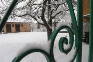 tuin-in-de-sneeuw